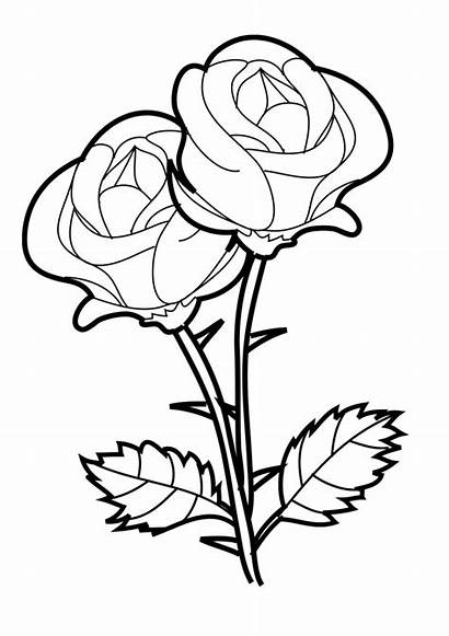 Coloring Roses Rose Pages Printable