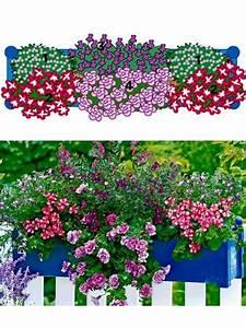 Herbstliche Blumenkästen Bilder : 51 besten blumenk sten dekorieren bilder auf pinterest ~ Lizthompson.info Haus und Dekorationen