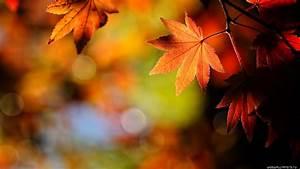 Autumn wallpaper | 1920x1080 | #38682