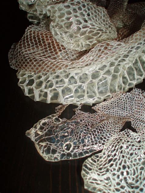 shed snake skin blood wedding pinterest