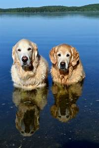 Golden Red River : 1000 ideas about golden retriever names on pinterest australian shepherd names golden ~ Orissabook.com Haus und Dekorationen