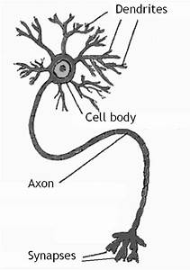 Diagram Nerve Cell Picture