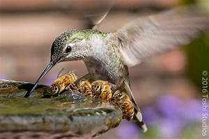 Do you know about the birds and the bees? | Audubon California
