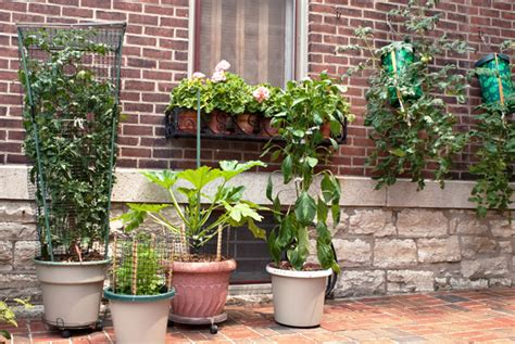 Container Gardening With Climbing Plants  Dave's Garden