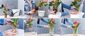 Anthurie Im Wasser : derni re tendance anthurium sur eau ~ Yasmunasinghe.com Haus und Dekorationen
