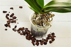 Luftwurzeln Bei Orchideen : orchideen umtopfen so gehen sie mit luftwurzeln um ~ Frokenaadalensverden.com Haus und Dekorationen