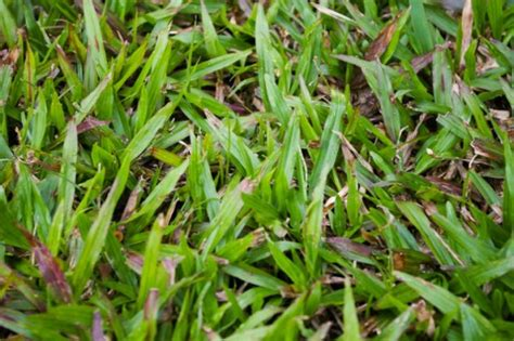 different grasses different types grass different types