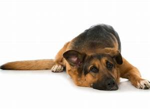 Signs And Symptoms Of Bloat In Dogs