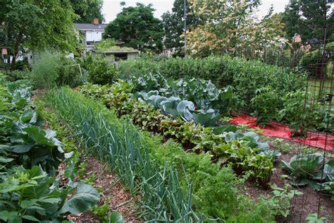 Garden Vegetarian - the time to prepare vegetable gardens