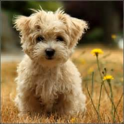 cute dog breeds big dog pet photos gallery q1o3g743yp