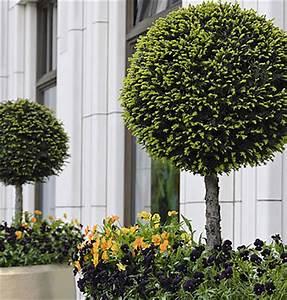 Sträucher Auf Stamm : pflanzenfamilie ~ Michelbontemps.com Haus und Dekorationen