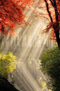 Most Beautiful Forest Sunrise