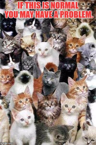too many cats what to do