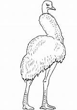 Emu Coloring Australia Printable Popular sketch template