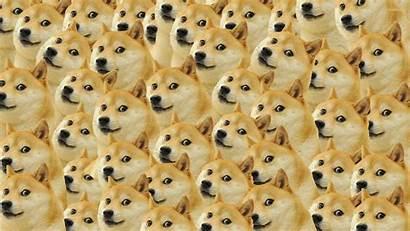 Meme Wallpapers Background Wallpaperboat