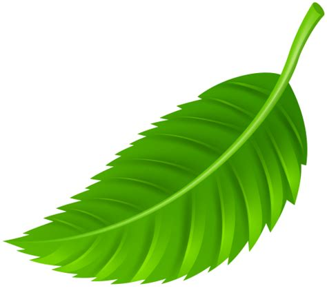 truck shirt leaf png clip best web clipart