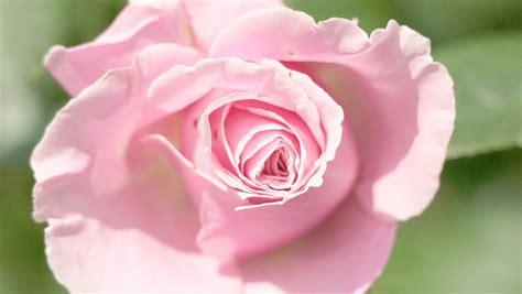 Rožu kolekcija