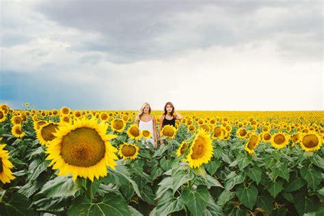 Amandas Portraits Boulder Co Sunflower Fields