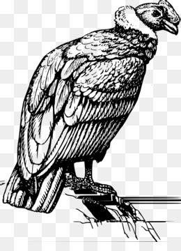 California Condor PNG - california-condor-wingspan