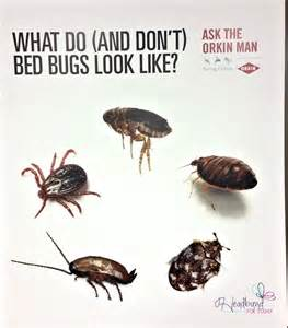 A Bed Bug Picture Of A Bed Bug Actual Size