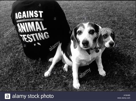 animal testing stock   animal