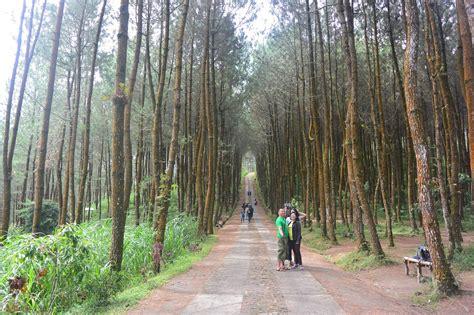 top selfie pinusan kragilan hutan pinus magelang