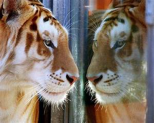 reflection | Big Cat World | Pinterest