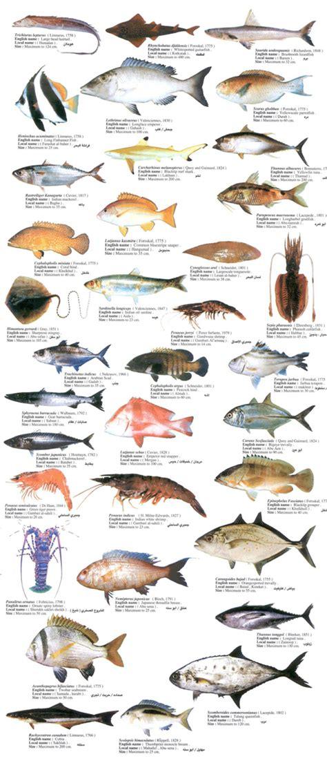 list  types  seafood list  sea animals