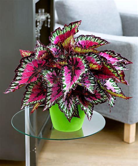 Trova tantissime idee per piante pendenti da interno. Foglie Colorate Piante Pendenti Da Interno / GIARDINI : È ...
