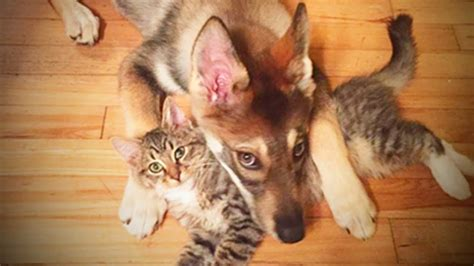 cute cats  dogs cats  dogs friendship full