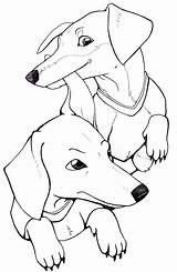 Dachshund Coloring Pages Dog Printable Puppy Drawing Adult Weiner Dogs Sheets Dachshunds Colorings Books Template Getcolorings Stencil Haired Getdrawings Clube sketch template