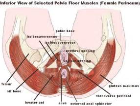 pelvic floor dysfunction and the problem with kegels on on