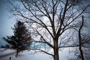 file tree in winter on the oak ridges moraine jpg