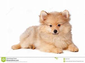 stock image cute puppy dog image