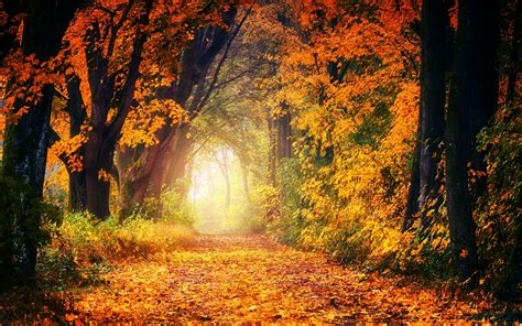 Forest 4K Wallpaper Dirt road Maple trees Autumn Fall