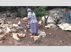 En el rancho dándole de comer a las gallinas YouTube