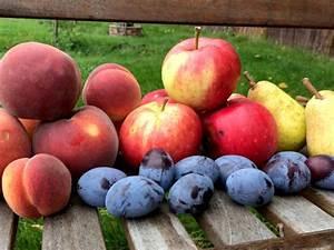 Obst Und Gemüse Entsafter Test : vitamine und zucker in obst haus garten test ~ Michelbontemps.com Haus und Dekorationen