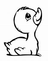 Coloring Pages Duckling Drawing Ducks Cartoon Duck Drawings Clipart Sad Mother Library Animal Simple Printable Colouring Sheets Horse Ugly Pencil sketch template