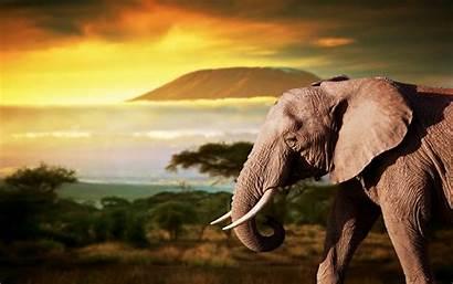 Elephant African Animal Mobile