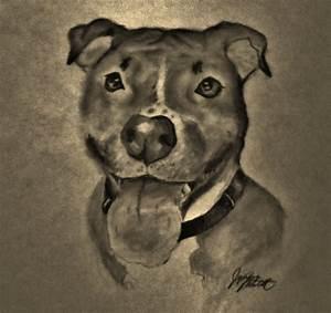 Pitbull dog by Jaylynessa on DeviantArt