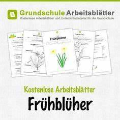 Cornelsen Arbeitsblätter Anatomie Arbeitsblatt Verdauung