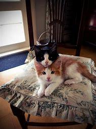 Funny Animals Cat