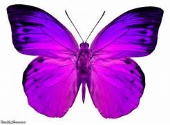 Pink Butterfly Picture...