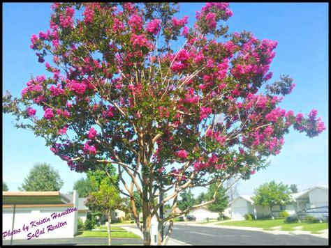 summer flowering trees flowering trees make summer so special