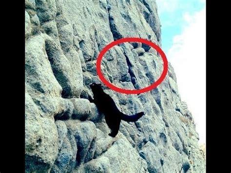 Millie The Amazing Rock Climbing Cat Youtube