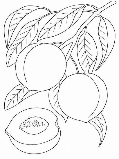 Peach Coloring Pages Fruits Printable Colors Recommended