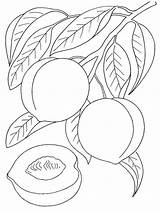 Peach Coloring Fruits Printable Colors Recommended Bright sketch template