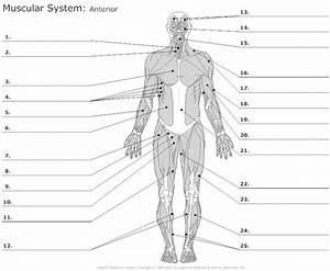 Muscular System  Muscle And Worksheets On Pinterest