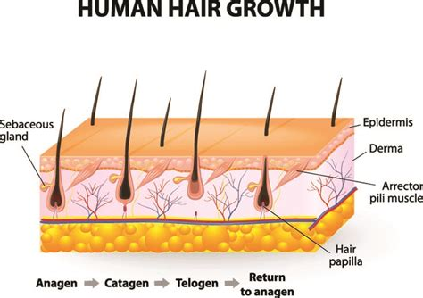 best pillow for back sleepers with apnea the way comprehensive guide to hair regrowth