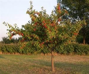 Comment Tailler Un Pommier : comment planter un arbre fruitier jardins et potagers ~ Dode.kayakingforconservation.com Idées de Décoration